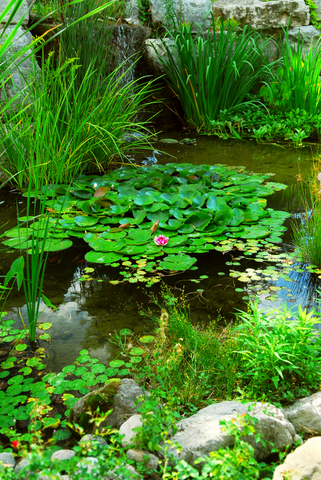 Garden fish pond plants for Backyard pond plants and fish
